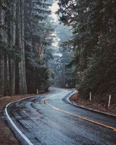 California 35 mit nassem Nebel im Wald bei der Skyline Boulevard Motorradtour in Kalifornien