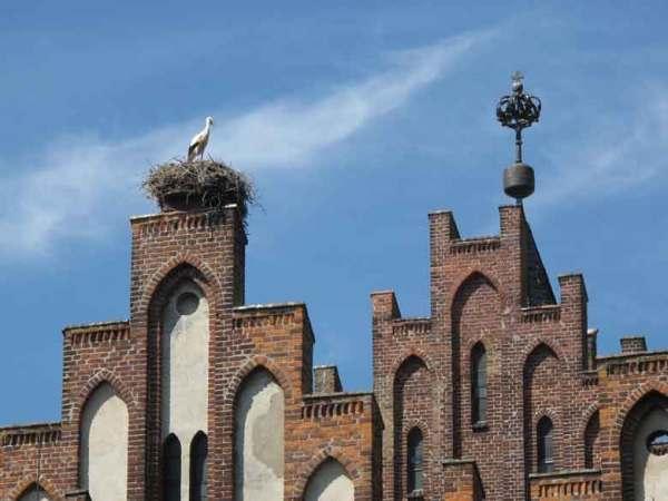 Storch in seinem Nest auf dem Giebel des Rathauses des Storchendorfes Linum im Havelland, gesehen auf einer Motorrad-Pilgertour nach Wilsnack