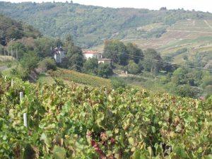 Weinberge im Beaujolais