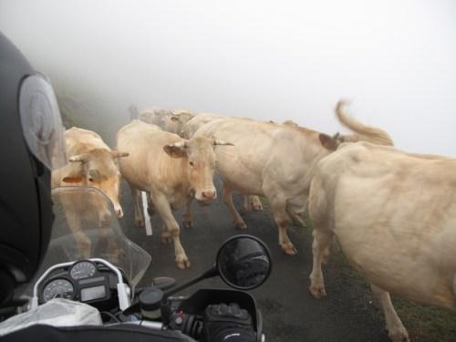 BMW R 1200 GS im dichten Nebel mit entgegenkommenden Kühen