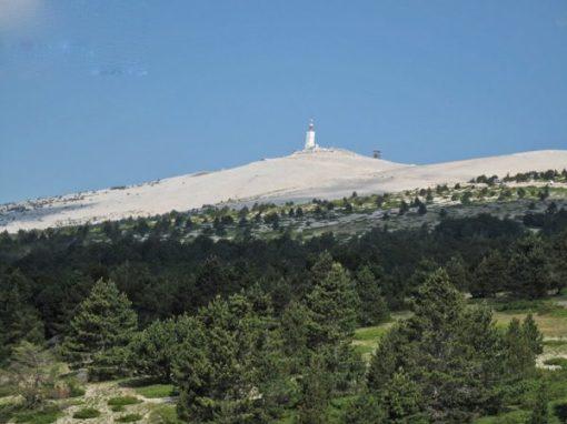 Blick auf die Mont-Ventoux-Bergstation von der Baumgrenze aus mit Krueppelkiefern in Vordergrund und hellen Geroellfeldern im Hintergrund auf den Gipfel zu
