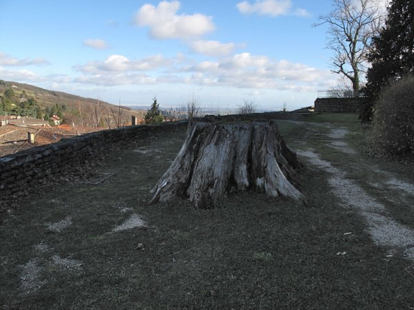 Baumstumpf der Friedenslinde in Riverie im Département Rhône (Frankreich)