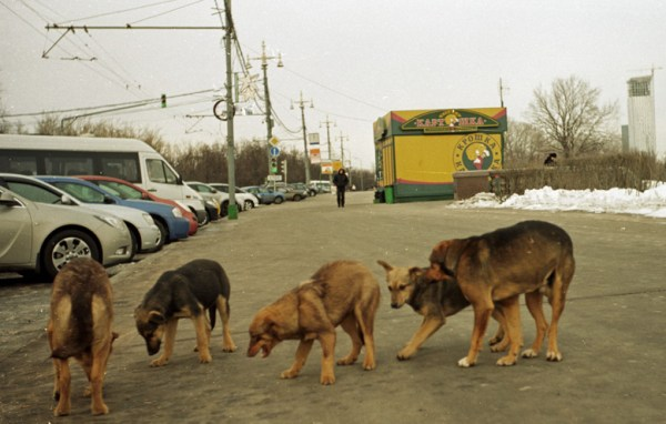 Hunderudel in Moskaue im Winter, gesehen bei einer vorweihnachtliche Erkundungstour in Moskau