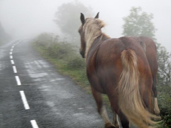 Pferde auf dem Col d'Osquich in den französischen Pyrenäaen im Nebel, fotografiert auf einer Motorradtour Südwestfrankreich Teil 2