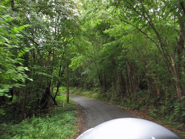 Sträßchen durch den Wald in der Auvergne in Frankreich von einem Motorrad aus aufgenommen