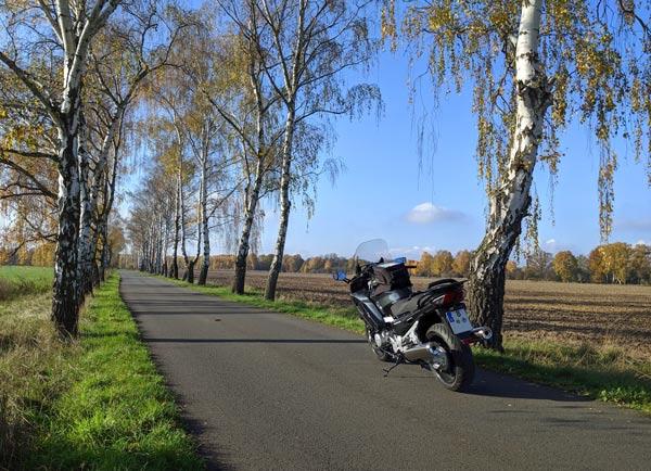 Herbsttour zum Saisonende: Motorrad in einer Birkenallee im Havelland