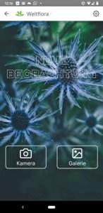 PlantNet Pflanzenbestimmung App