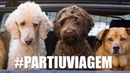 Cachorro no carro. Como Transportar?