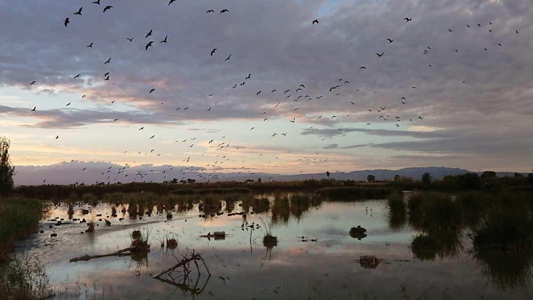SEAT et le Groupe Volkswagen restaurent l'écosystème du parc naturel du delta de l'Ebre