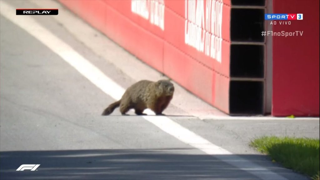 f1 canada marmotta in pista