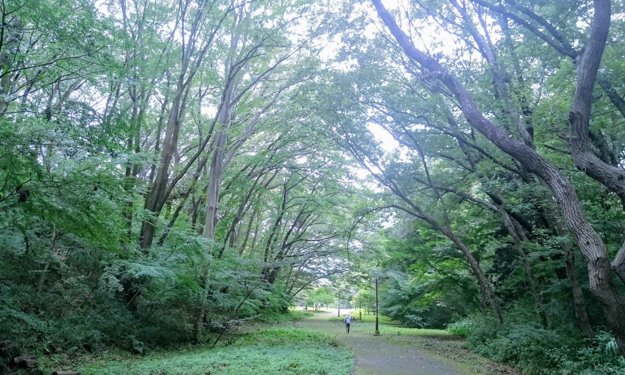 都立桜ケ丘公園