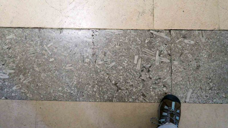 Fossils in the floor at the Natural History Museum, London