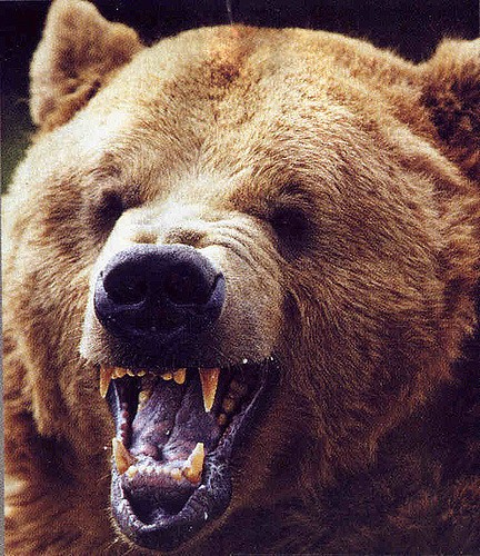 Stock's Get Slammed As The Bear's Bite Back on January 22