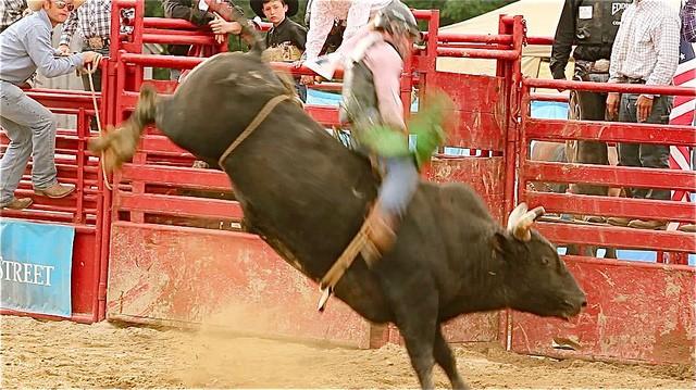 The Bulls Break Loose as Stocks Resume Their Path Higher