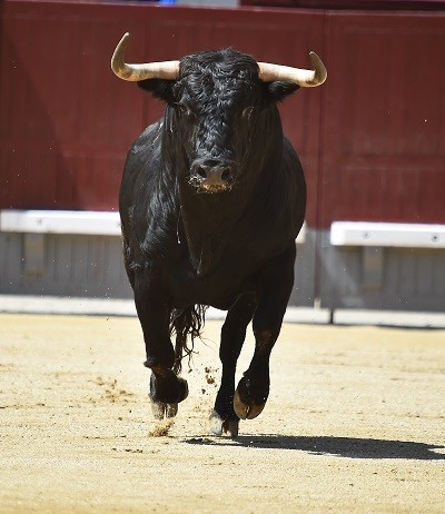 "The Bull Will Run Again, It Isn't A Matter Of ""If"" But ""When"""