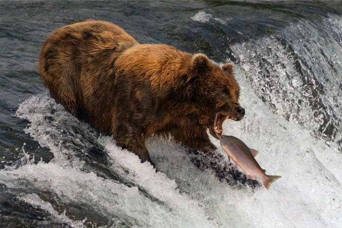15 Reasons Why The Recent Stock Market Rally Is About To Crap Out