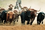 The Bull Market Herd May Be Running Right For The Cliff