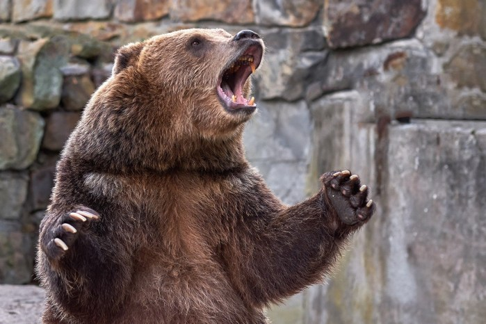 The Bear Awakens And Is Hungry For Overvalued Tech