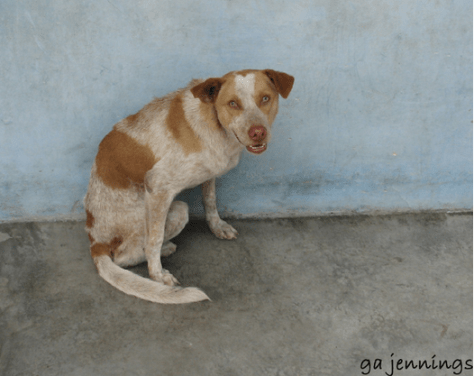 perro en su vejez 1
