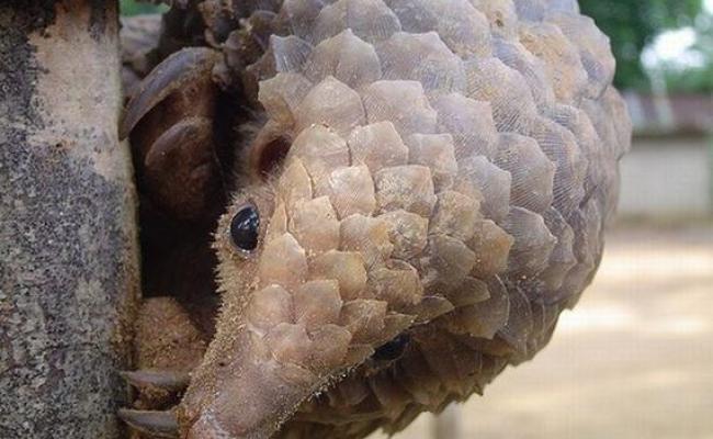 The Worlds Strangest Rarest Animals