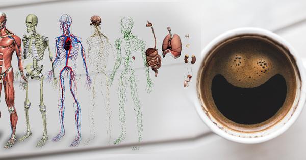 11 faktów na temat kawy o których prawdopodobnie nie wiedzieliście