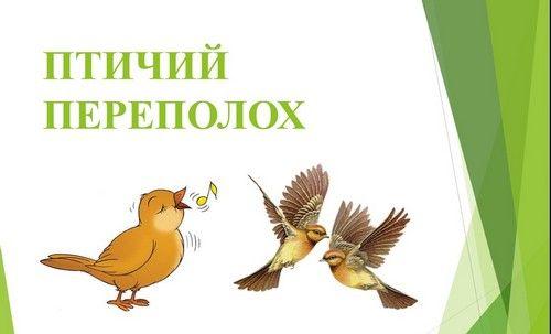 vneklassnoe-meropriyatie-o-pticah1