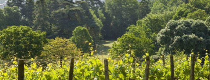 domaine-st-just