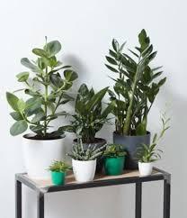 leuke planten tafel
