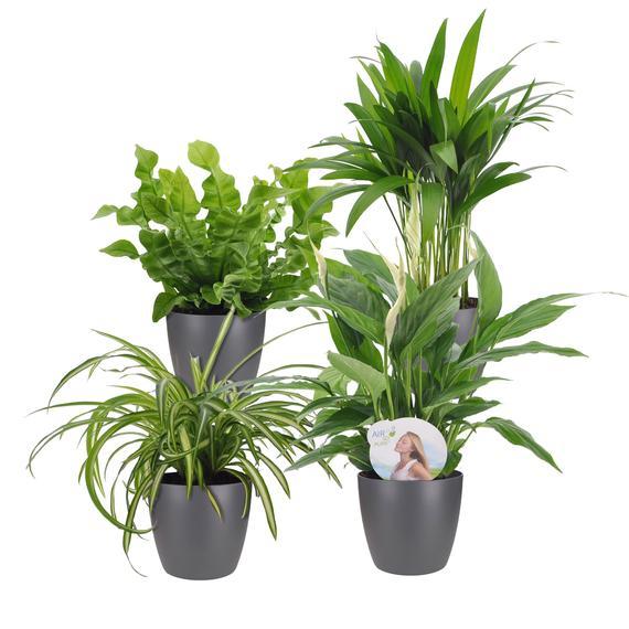 planten online tuincentrum kopen