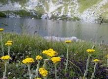 Флората и Фауната во Македонските Национални Паркови и Мариовскиот Регион