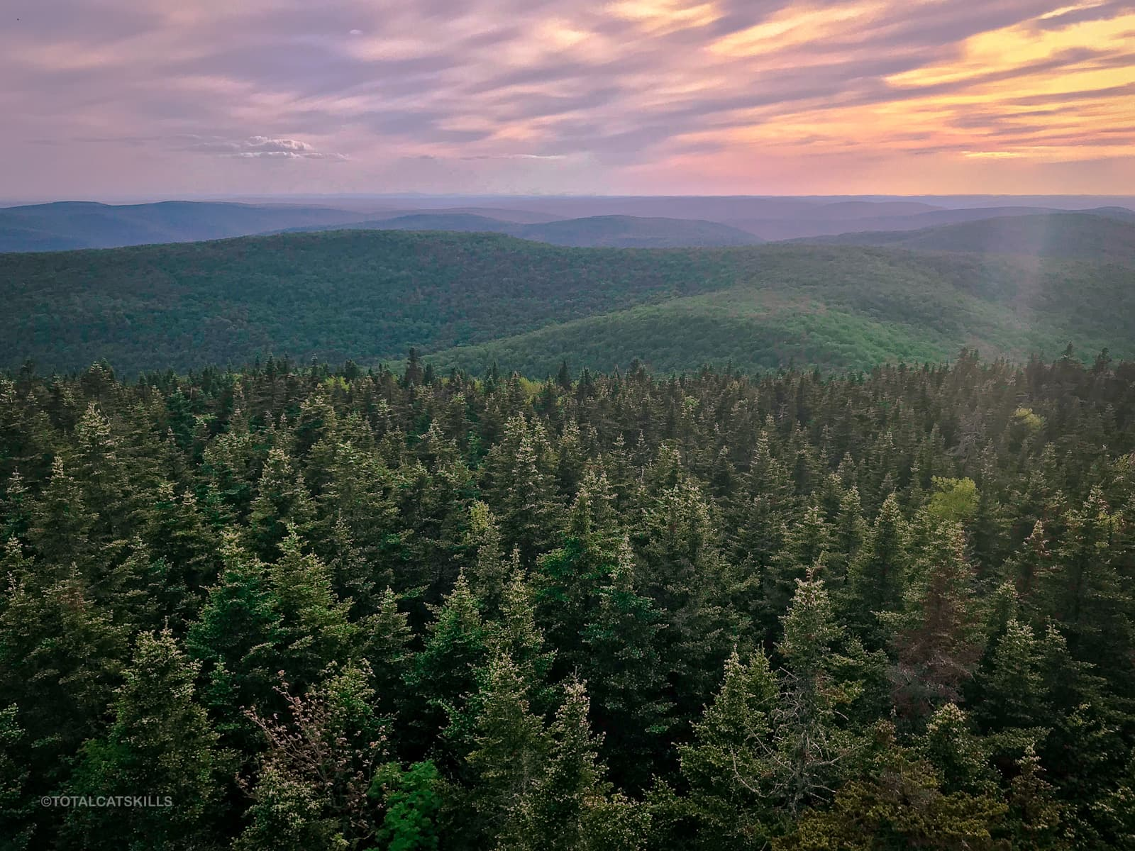 conifer forest view