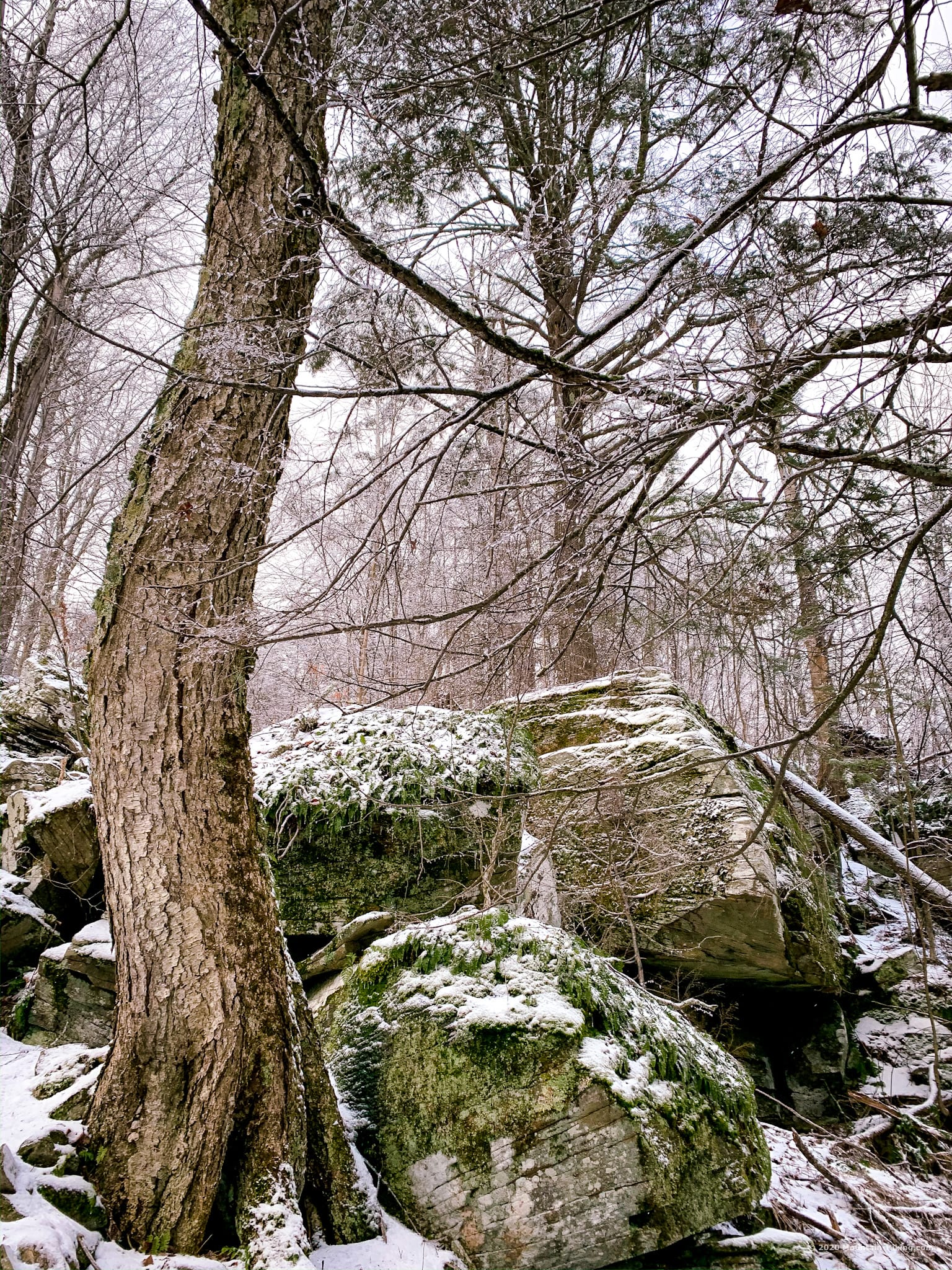 Tree and boulders, Catskills, Wittenberg