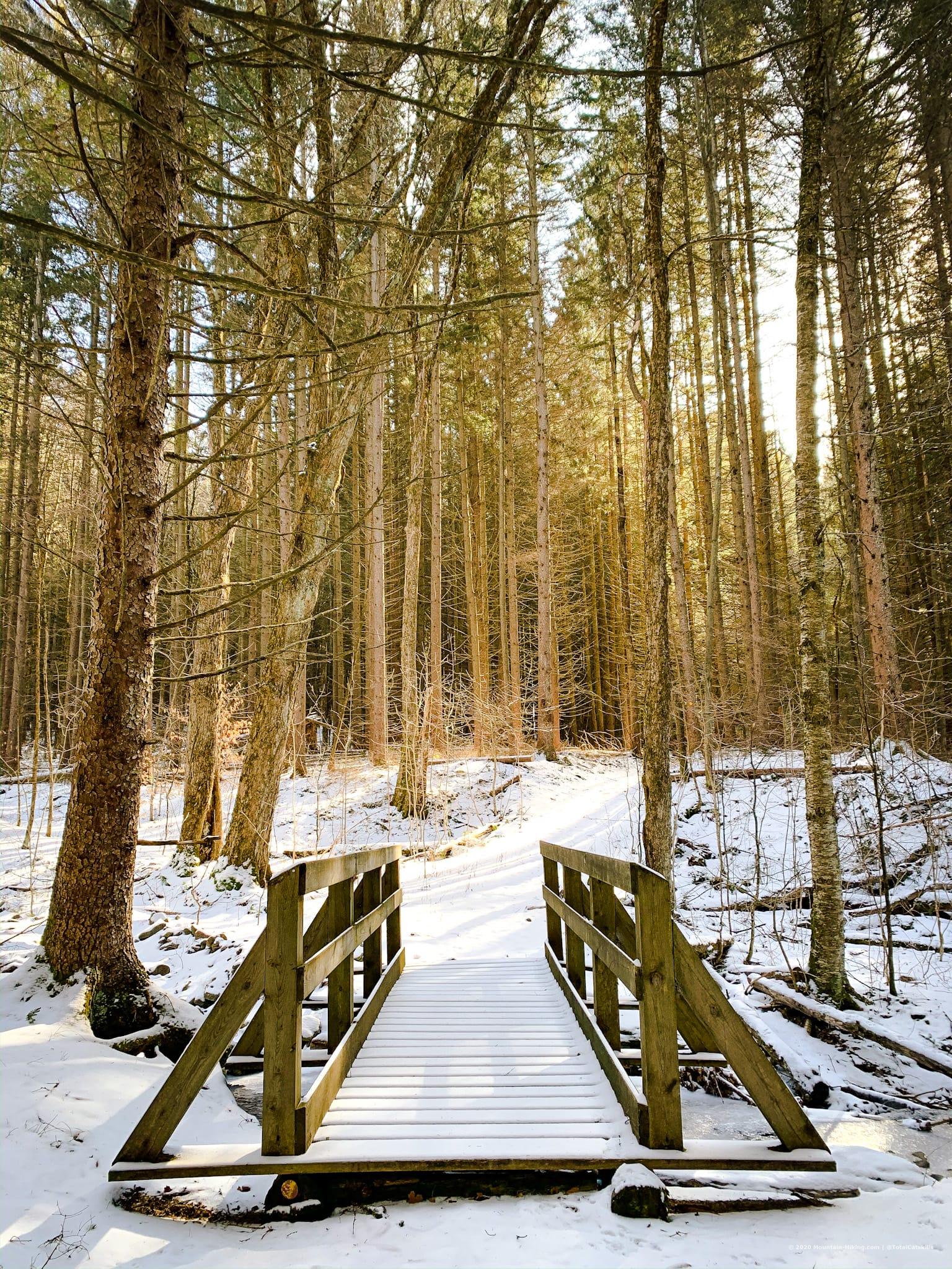footbridge in woods