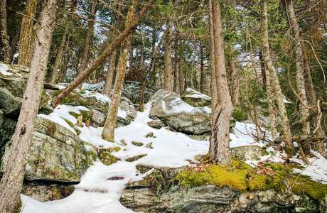 trees, snow, boulders, moss