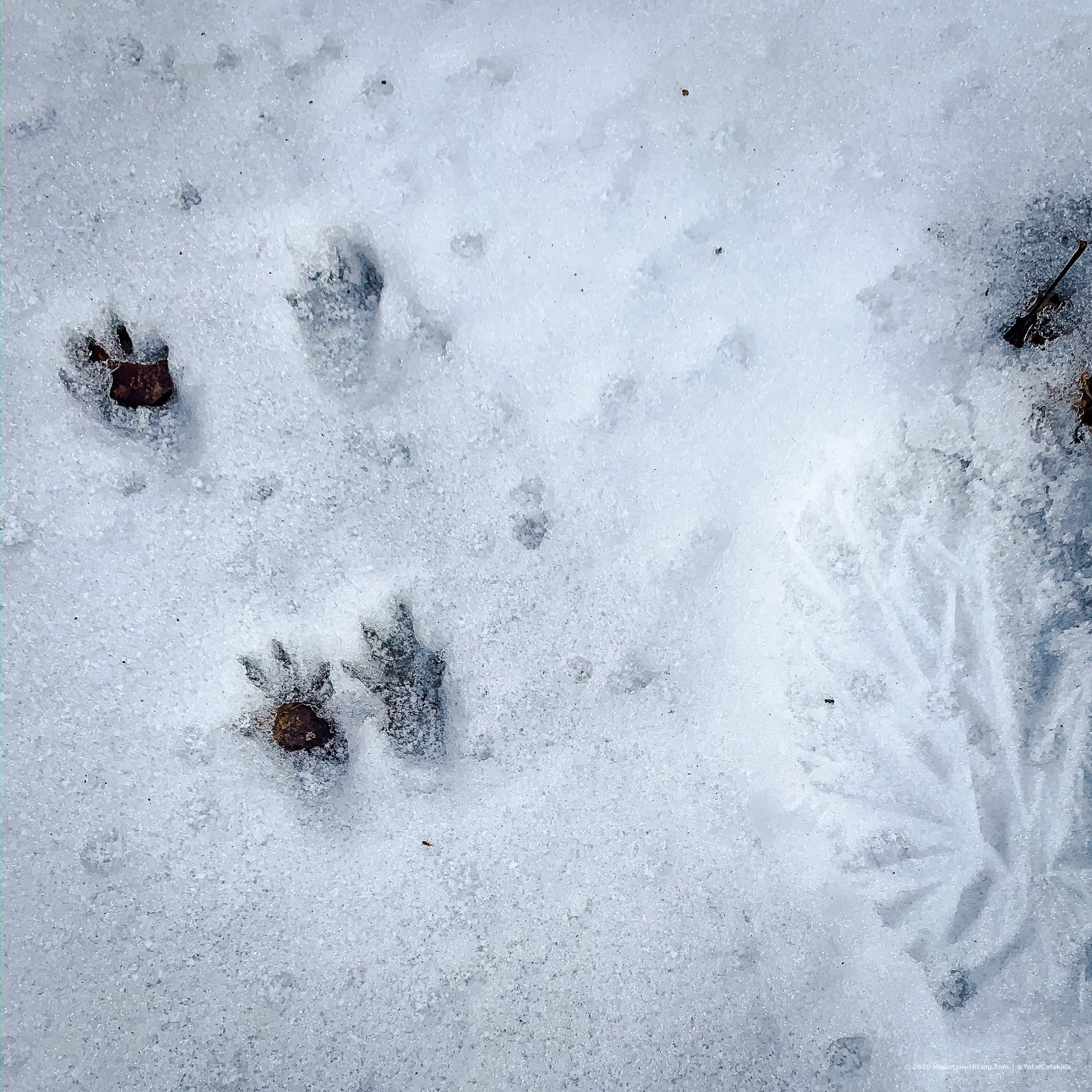 squirrel prints