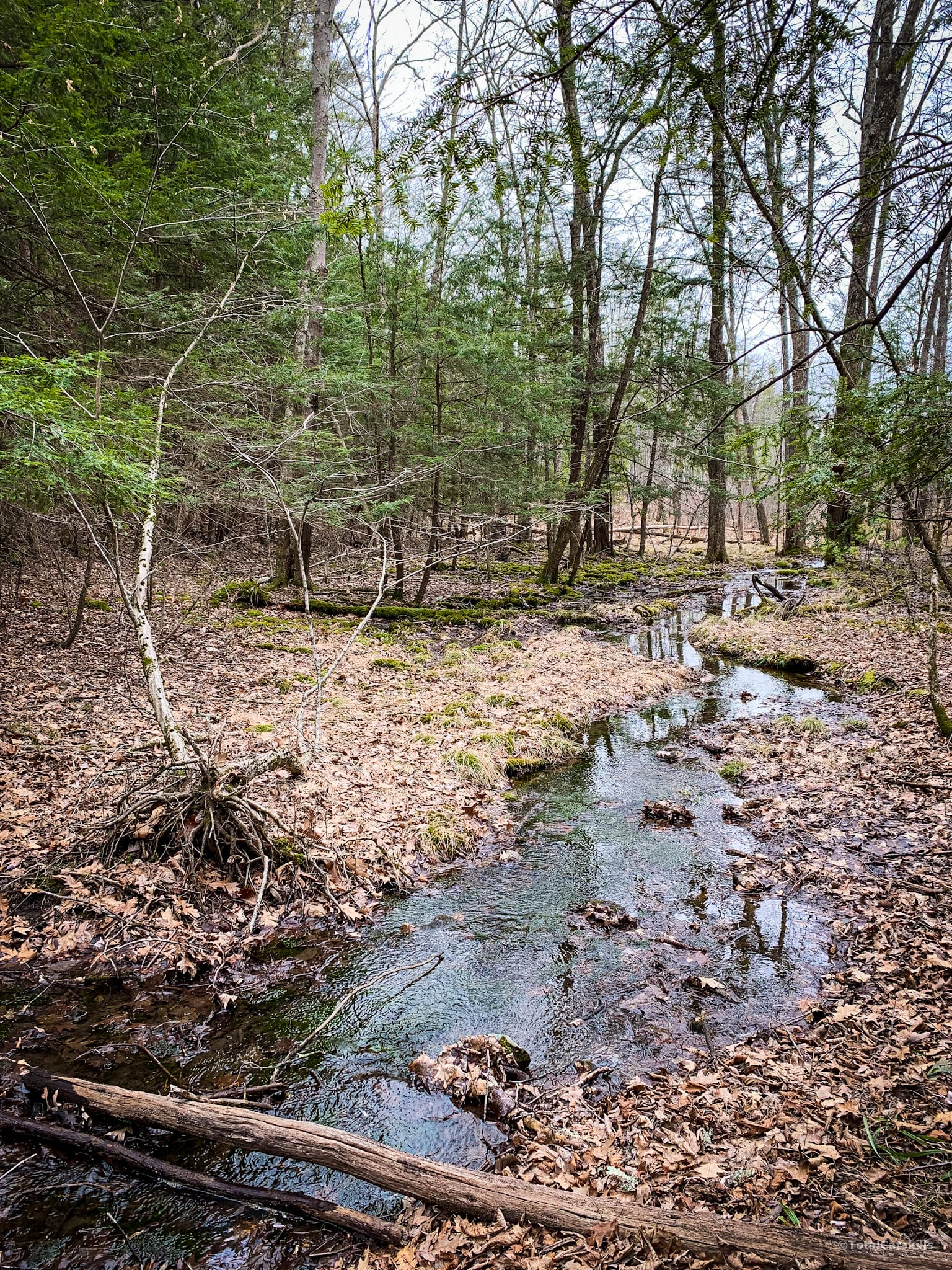 Catskill stream and woods