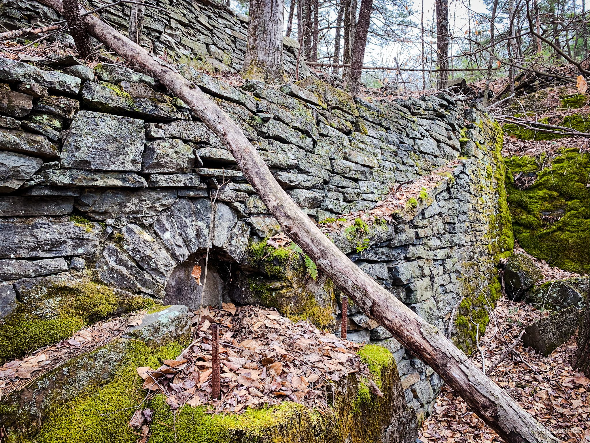 ruins in woods