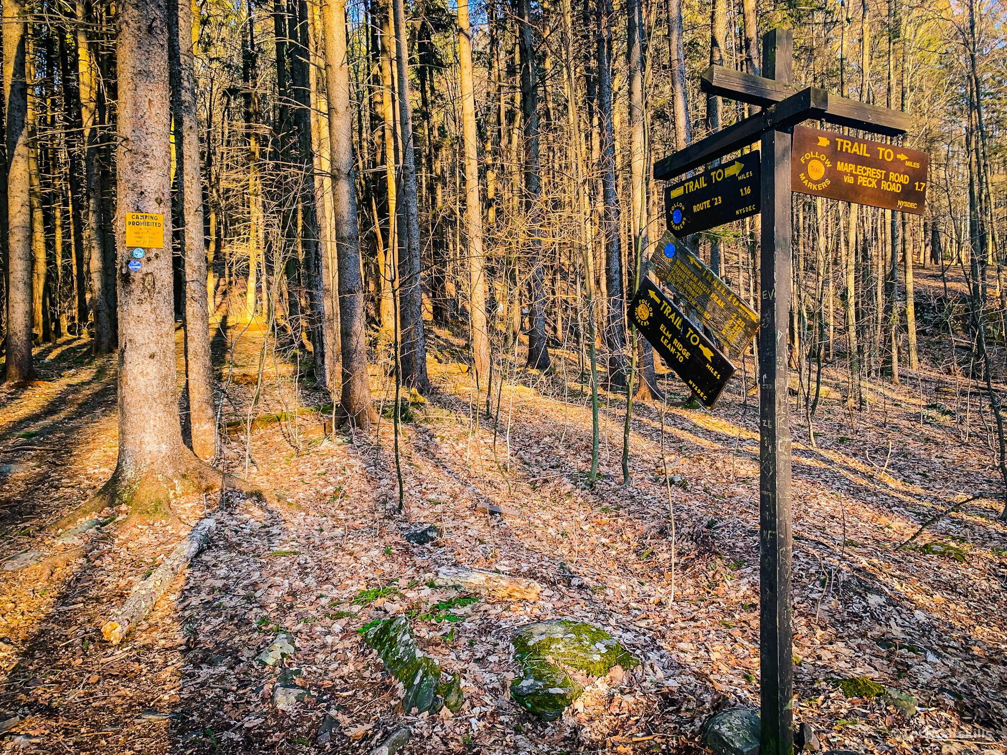 trail signposts in woods