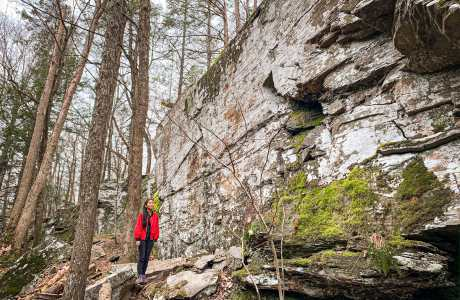 forest cliff face