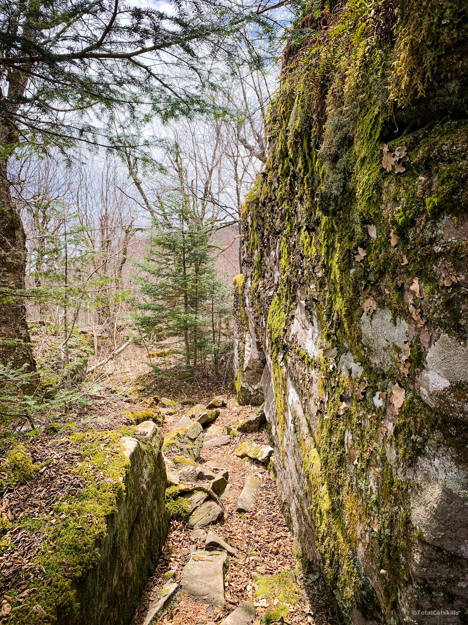 rock wall covered in moss