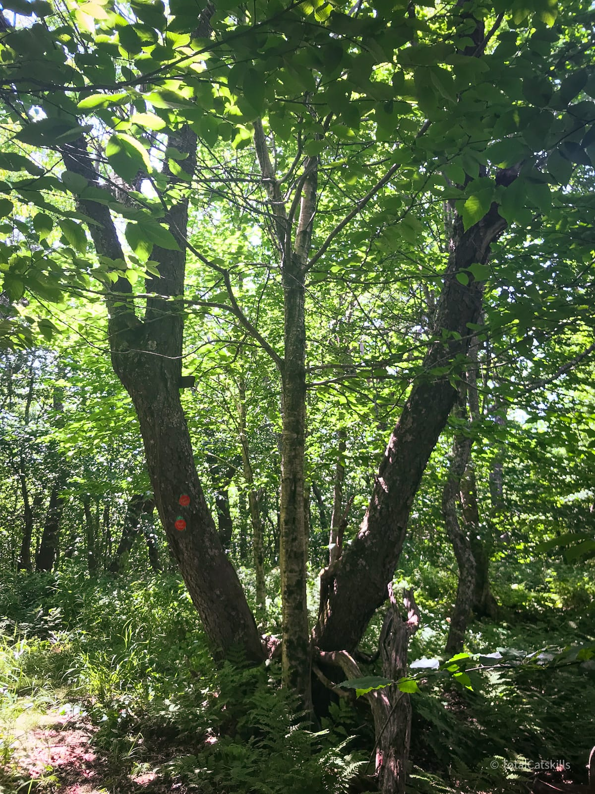 tree at summit