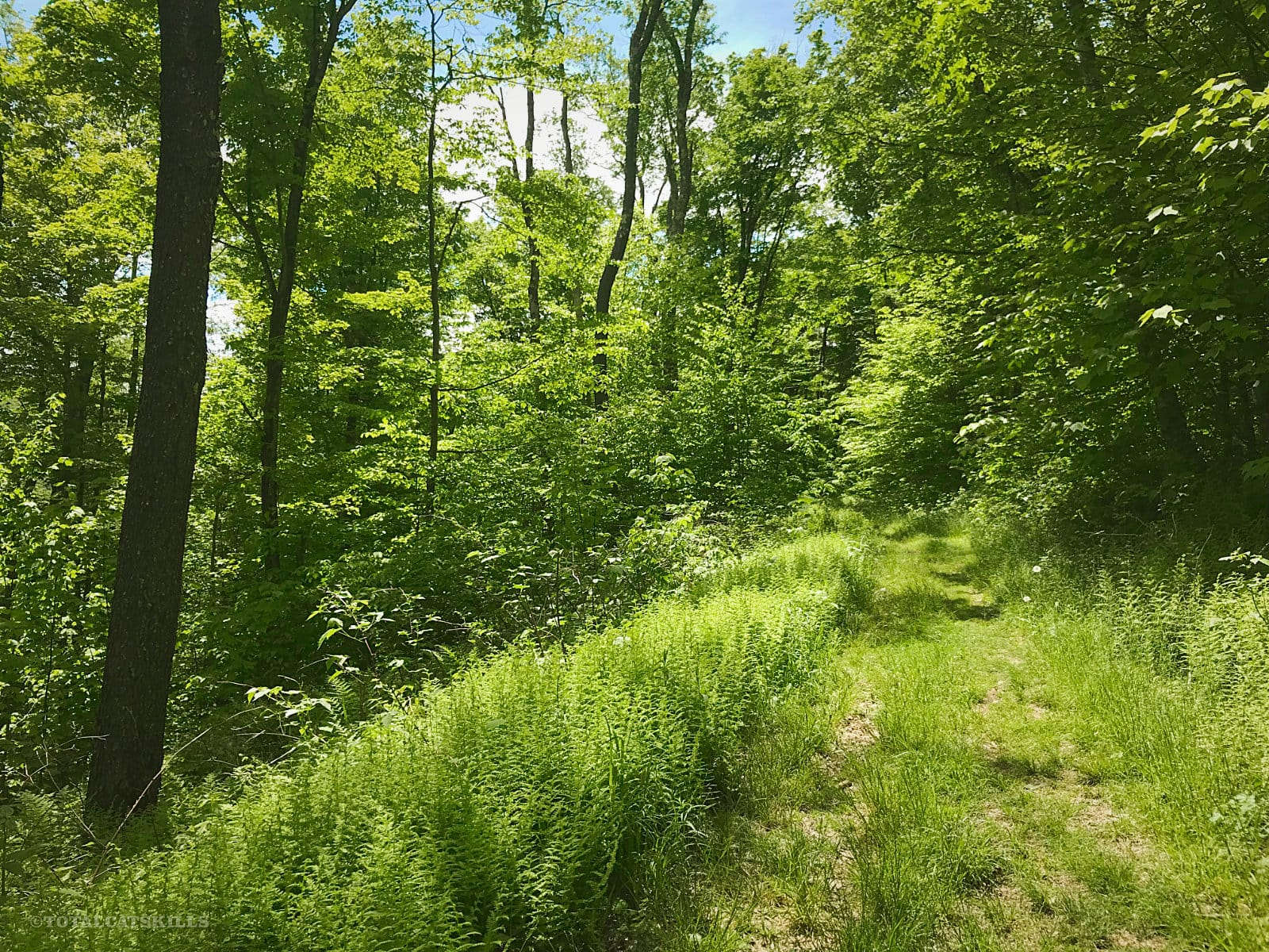 grassy hiking trail in forest