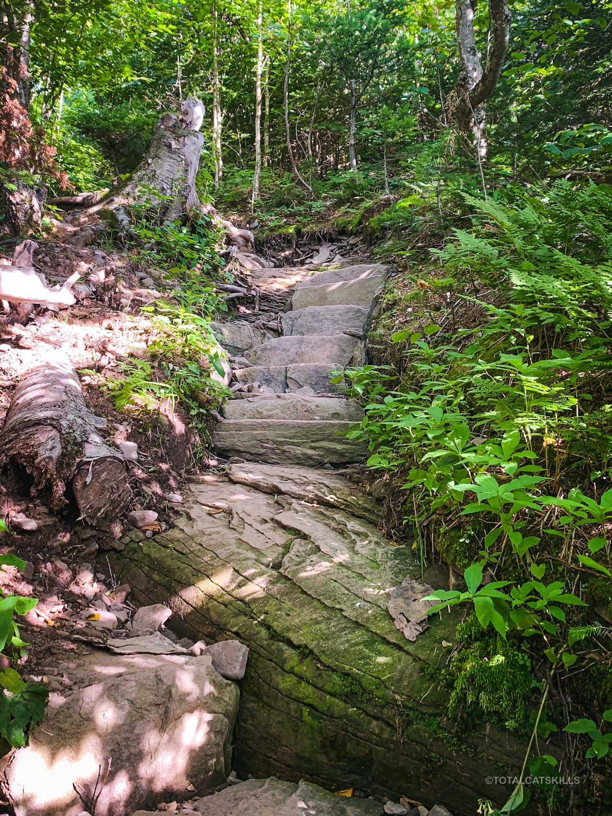 stone steps on trail