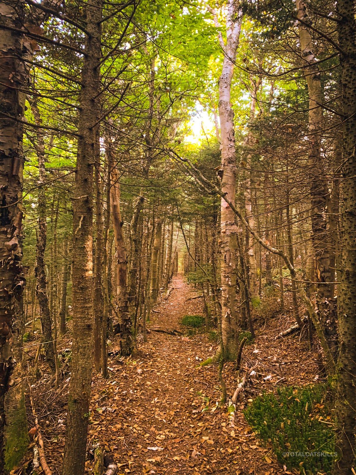 unmarked trail