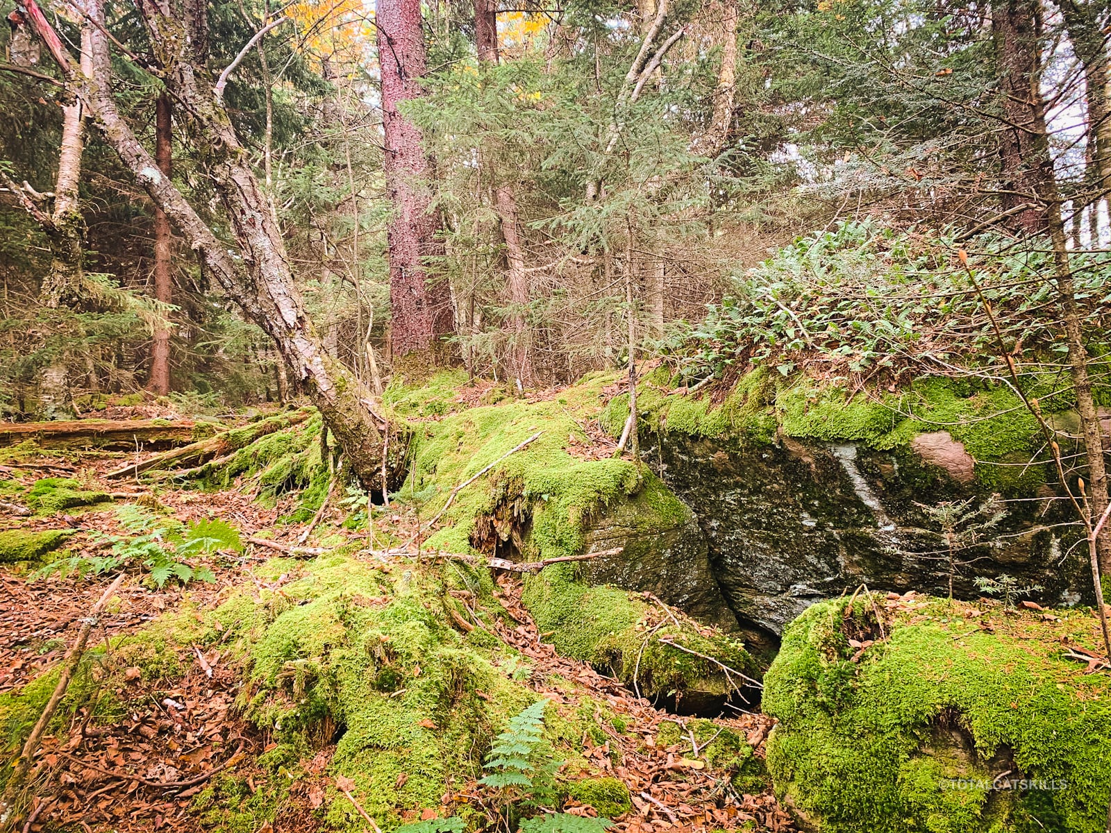 mossy woods and boulders