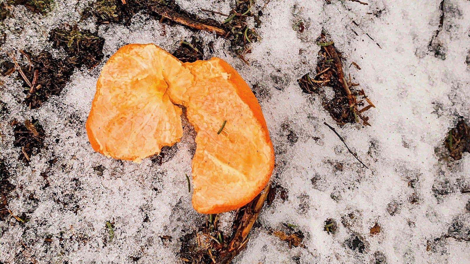 discarded orange peel sitting on snowy ground