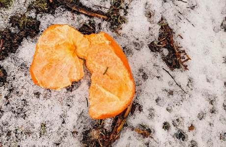 discarded orange peel sitting on snowy ground
