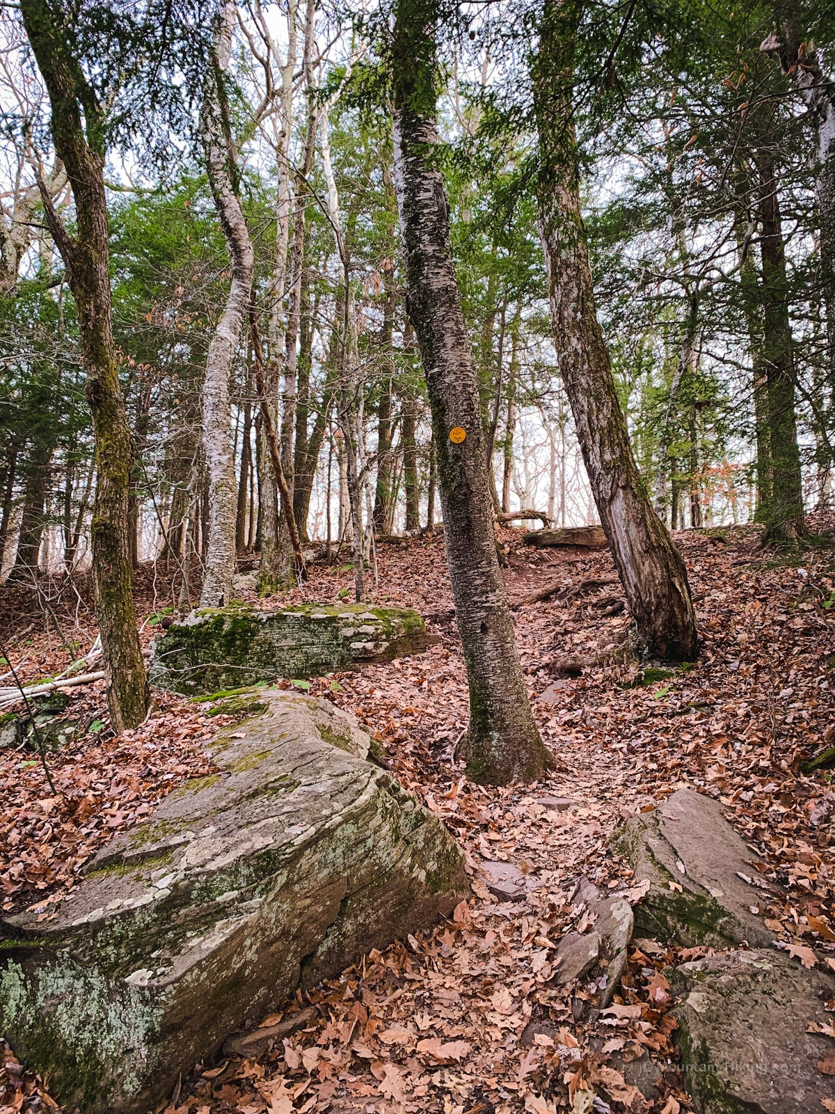 Huckleberry Point Trail: woods and boulders