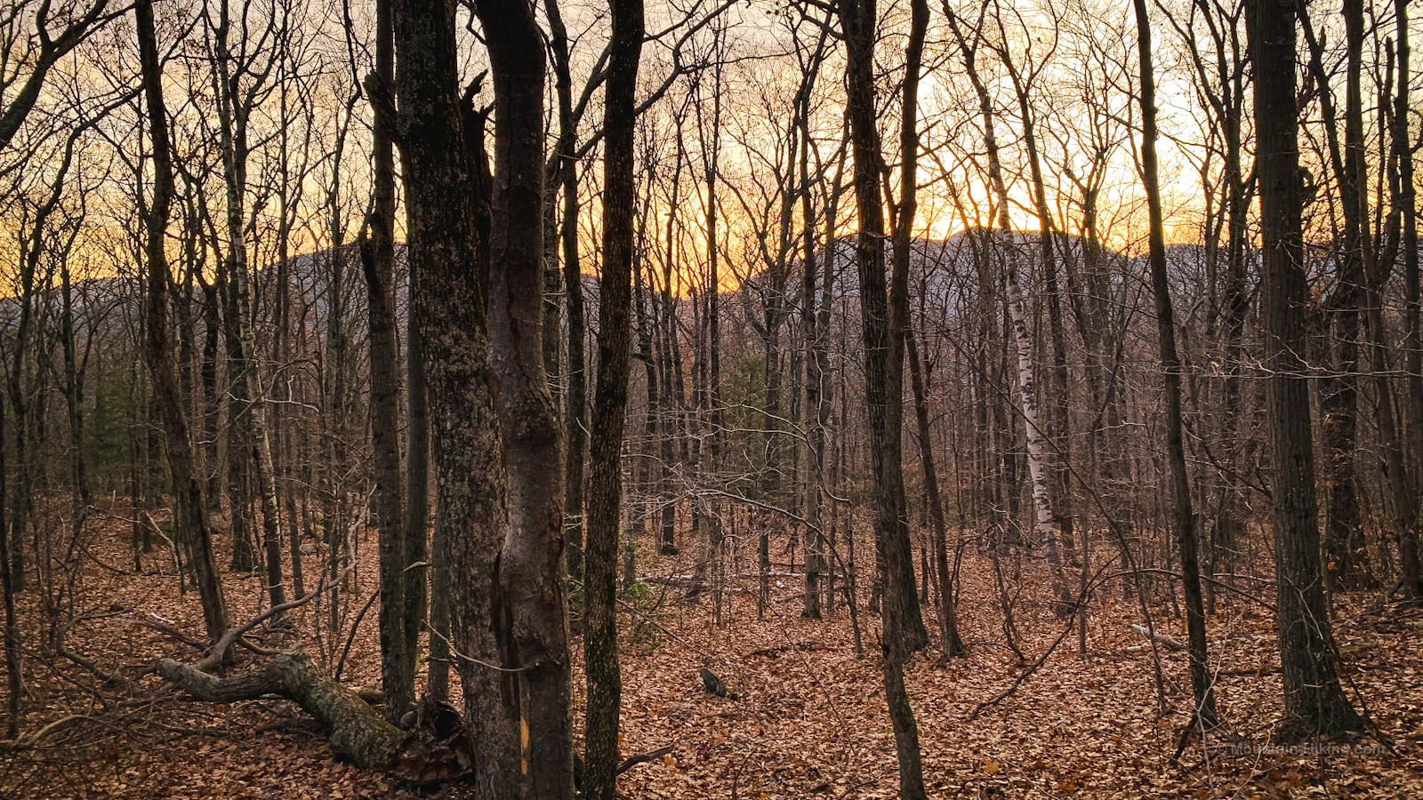 Huckleberry Point Trail: screened sundown view of mountains through trees