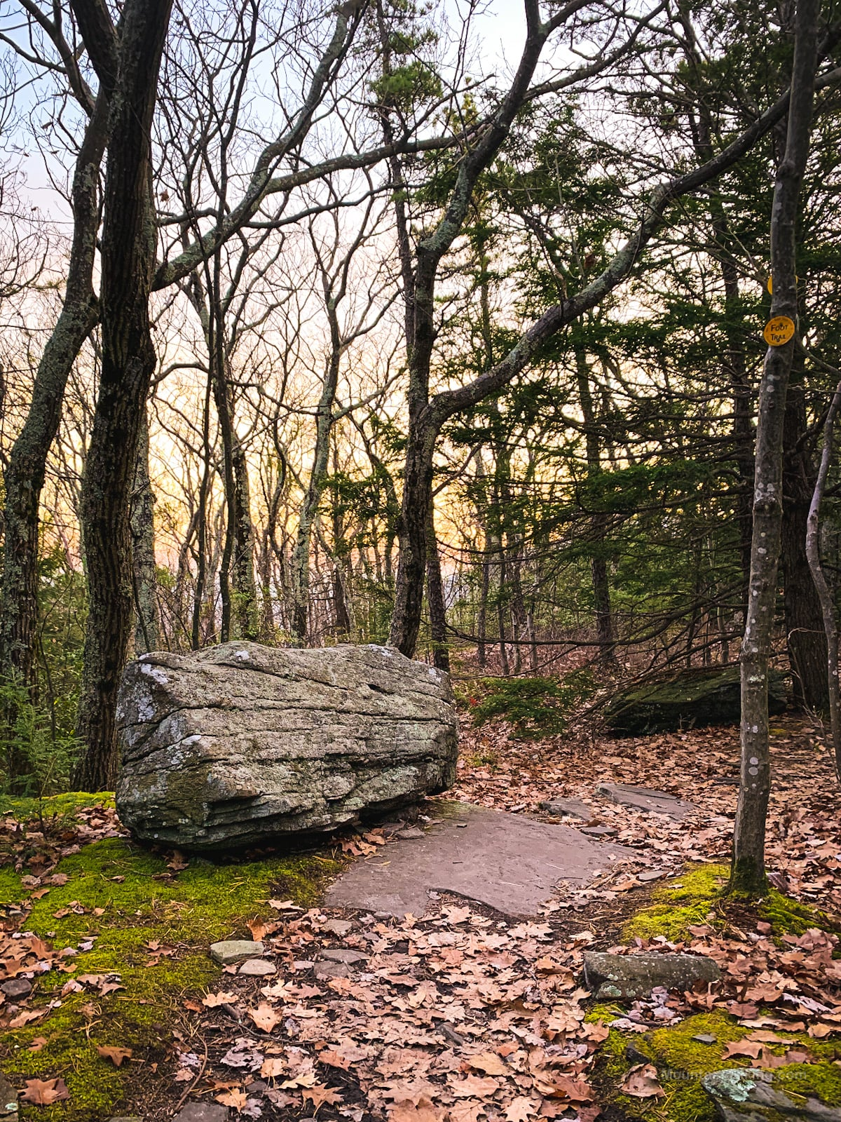 Huckleberry Point Trail: glacial erratic in woods